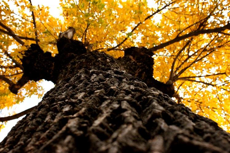 autumn ehmej